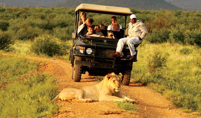 Traversing over 75 000 hectares of vast plains, Madikwe Game Reserve offers spectacular game viewing
