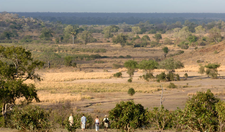 Walking is what the Selous is all about, it is an incredible opportunity to learn more about the little things in the bush.
