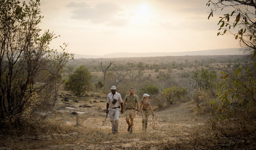 Our guides are some of the best in Tanzania and can show you a whole world that you miss when you are in a vehicle.