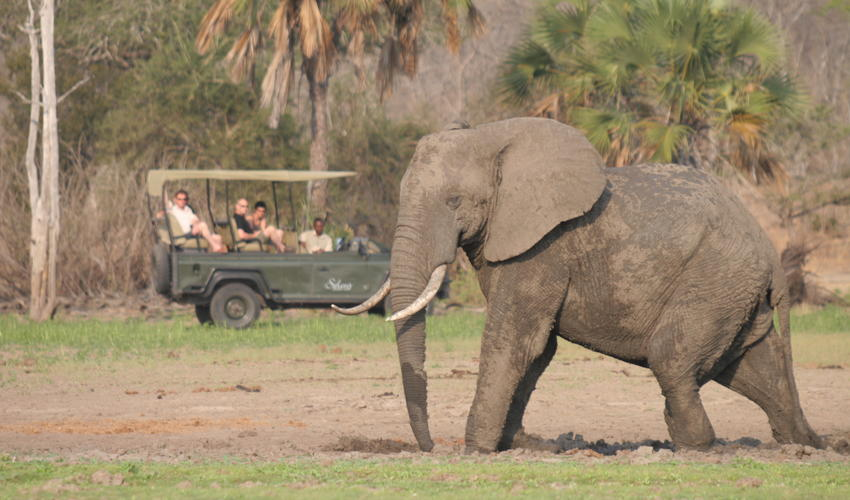 Prime wildlife area in Selous, makes for perfect game drives