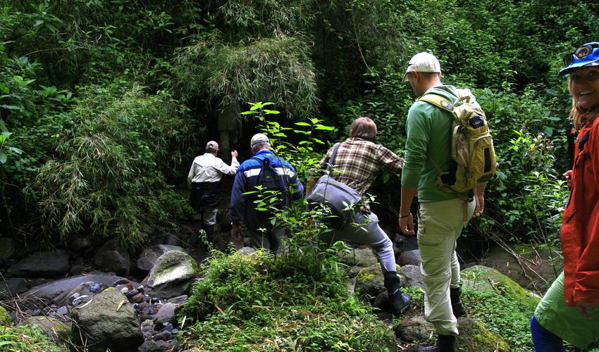Gorilla trekking from Sabyinyo Silverback Lodge
