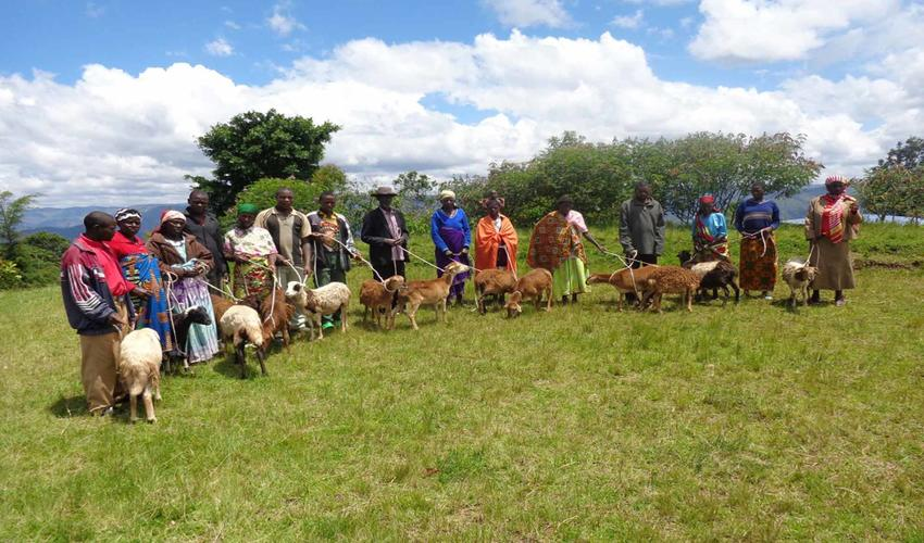 "Virunga ""One Sheep per Family"" Community Project"