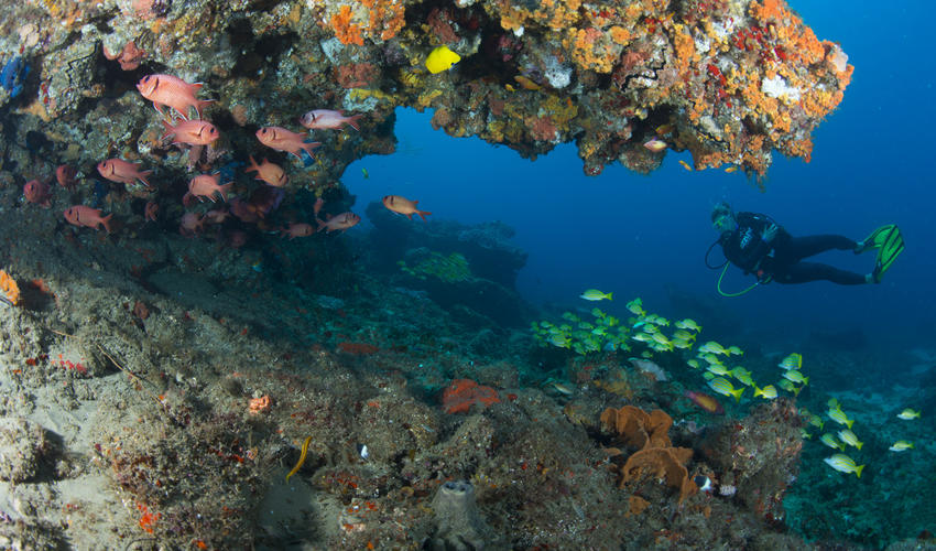 Diving at Rocktail takes place in the Maputaland Coastal Reserve