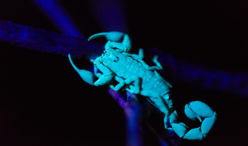 Nocturnal creatures come to life under the guide's UV torchlight