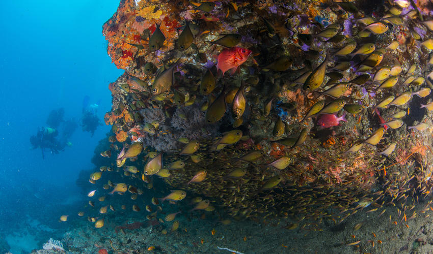Divers speak of Rocktail's pristine reefs with awe