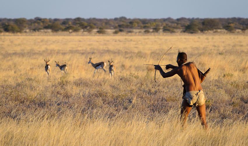 Traditional San Bushman hunting demonstration