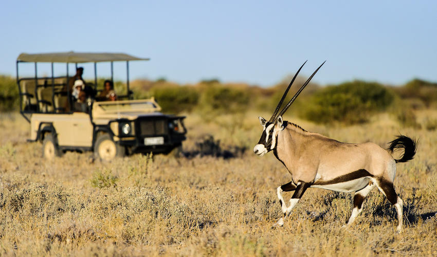The diverse array of antelope includes oryx