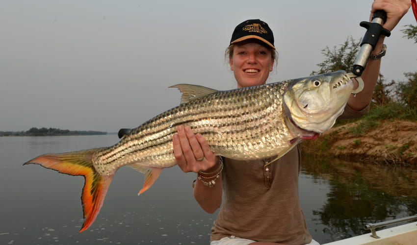 Try catch the magnificent Tiger Fish