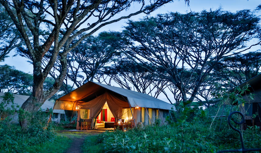 9 ensuite tents in the Acacia Forest