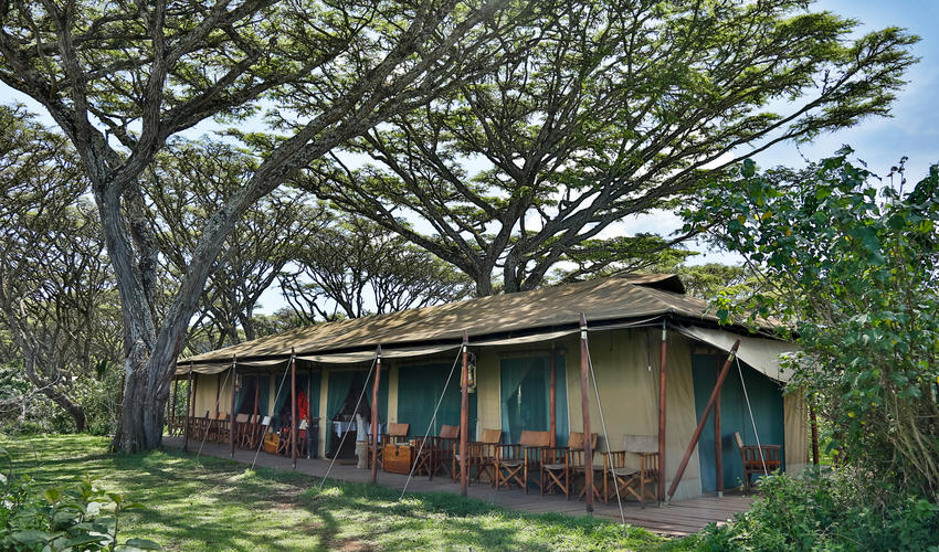 Lovely location set under the Acacia Trees