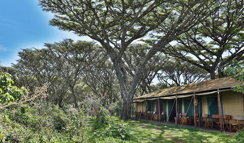 Beautifully set up under the Acacia Trees