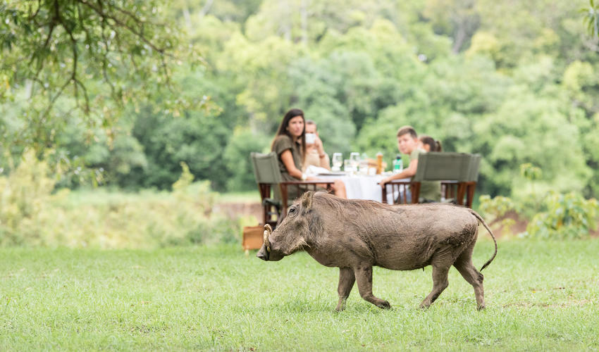 Governors' Camp Family Safaris