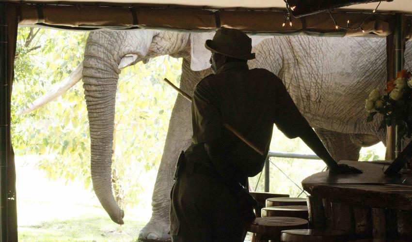 Elephant Blossom comes past Governors Camp bar