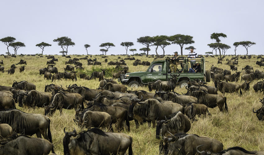 Game drive amidst the wildebeest migration