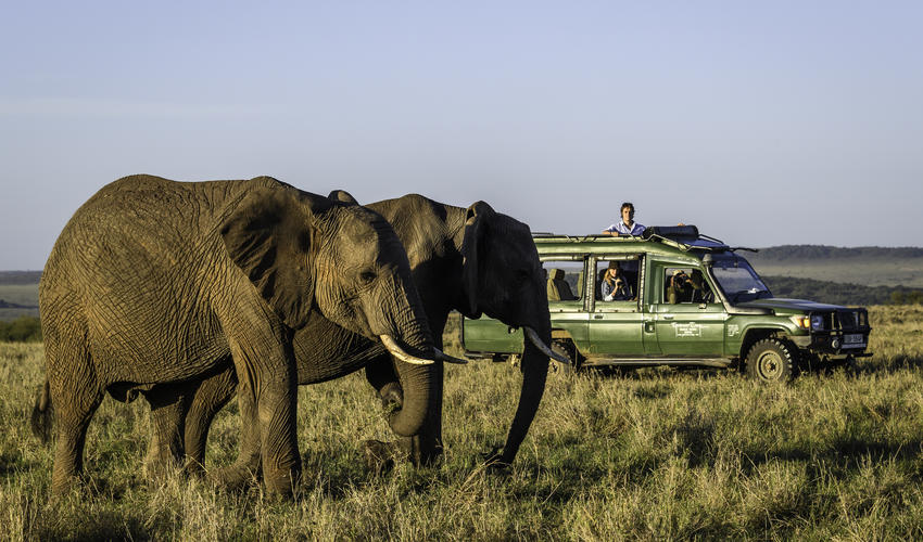 Game driving in Masai Mara's richest wildlife area