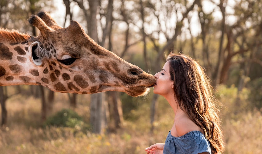 Sharing a kiss with a giraffe