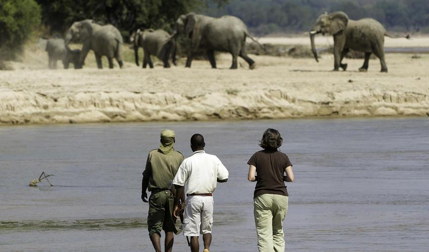 Fantastic walking safaris