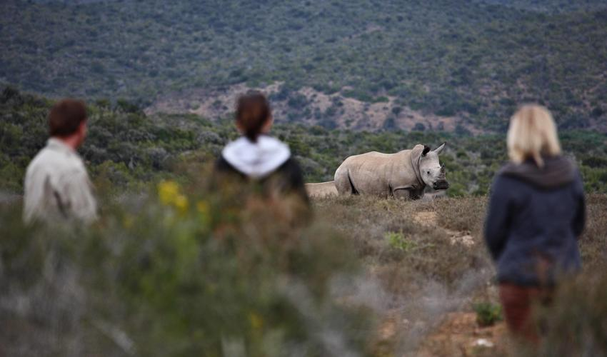 Additional activities available include Big Game Walks, Rhino Monitoring and Rhino Darting Safaris with specialist guides
