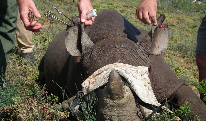 The opportunity to participate firsthand in rhino conservation