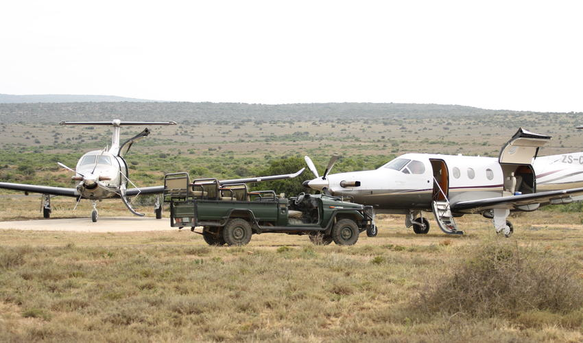 Daily scheduled flights from Port Elizabeth airport onto the Reserve's airstrip or road transfers are available