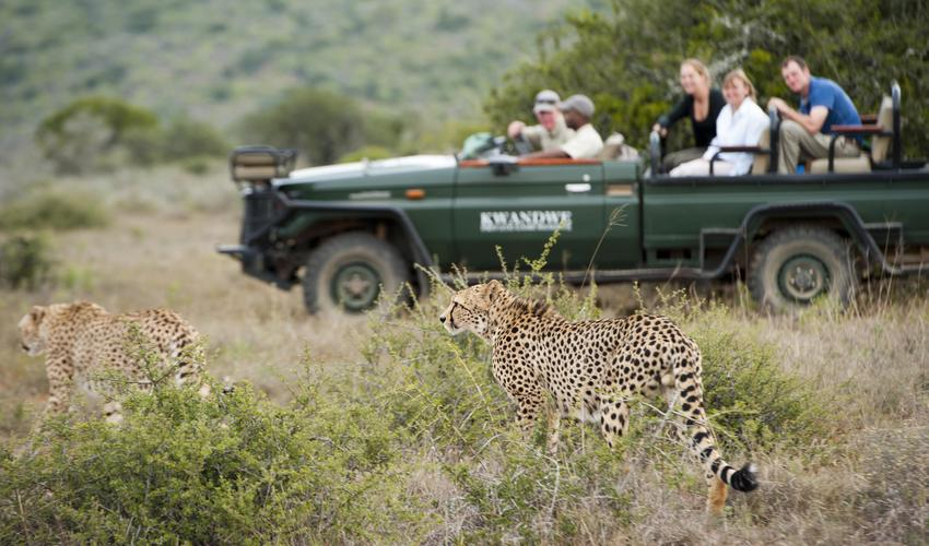 Your private safari vehicle, tracker and ranger, will lead you to explore the spectacular wildlife and unmatched scenery of Kwandwe at your leisure