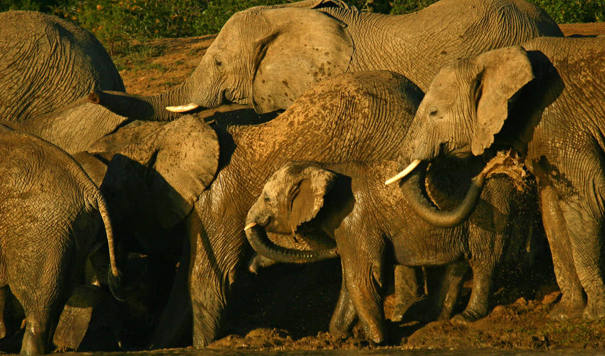 A herd quenches its thirst on a hot afternoon