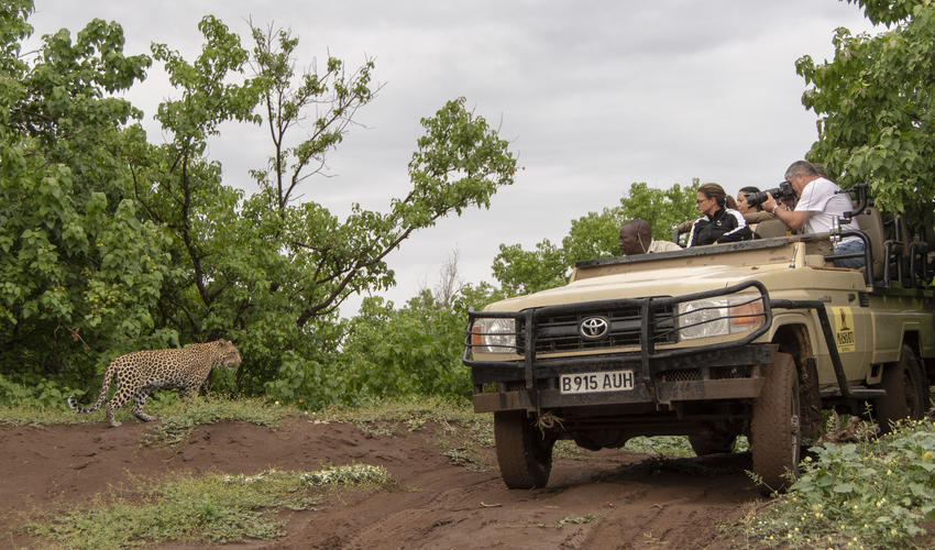 Open vehicle safaris and close encounters with Leopards