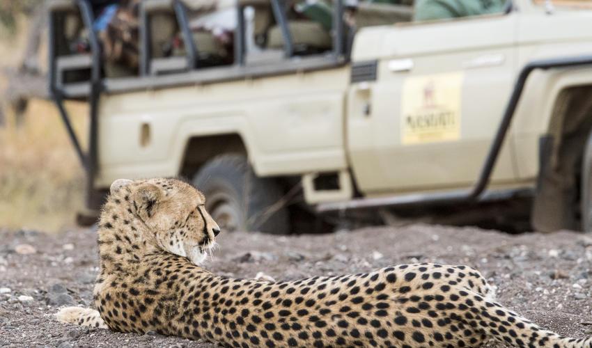 Daily sightings of cheetah at Mashatu