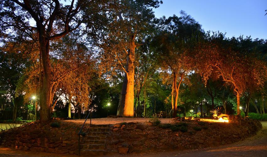 The famous Baobab outside the entrance