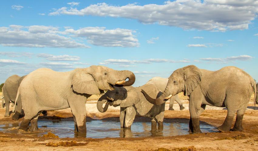 Elephants at the camp's waterhole