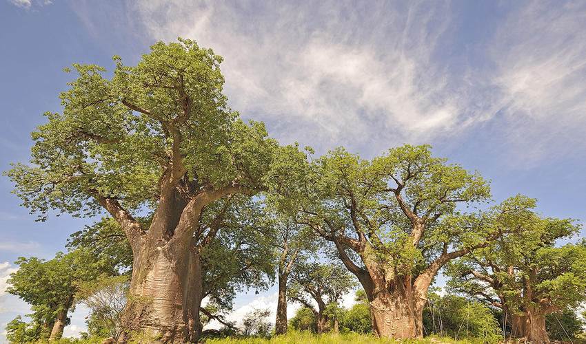 Day Trip to Baines' Baobabs
