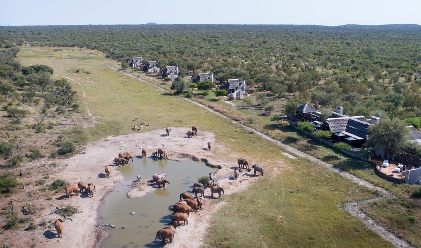 Elephants drinking at Jamala's private waterhole