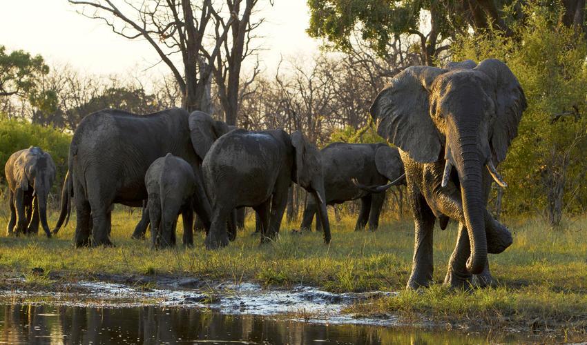 Elephants along the Selinda Spillway
