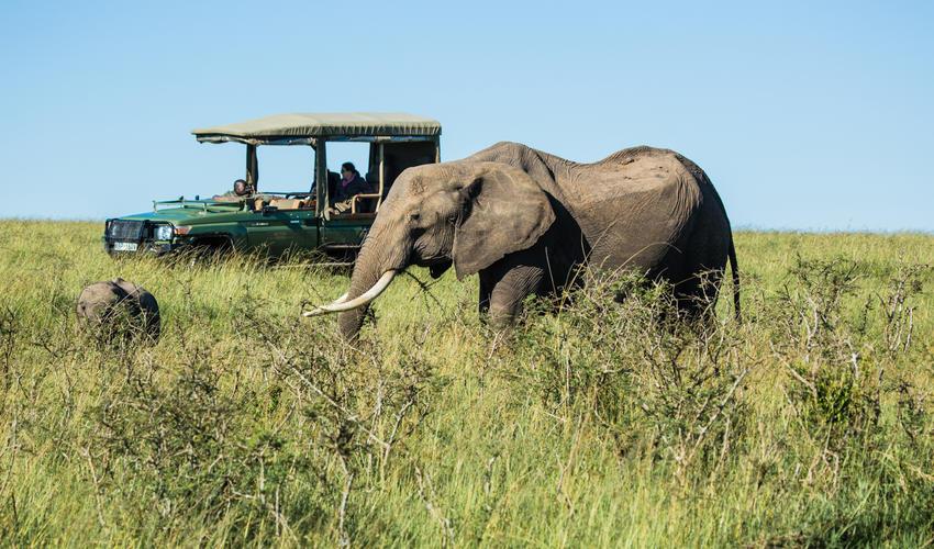 Elephant in the Olare Motorogi Conservancy