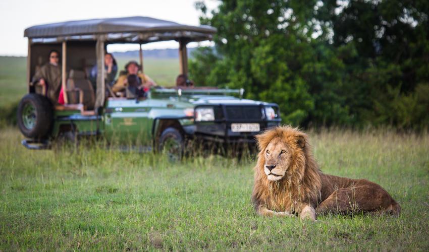 Game Drive near Mara Plains