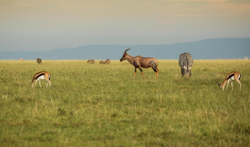 Plains Game in the Olare Motorogi Conservancy