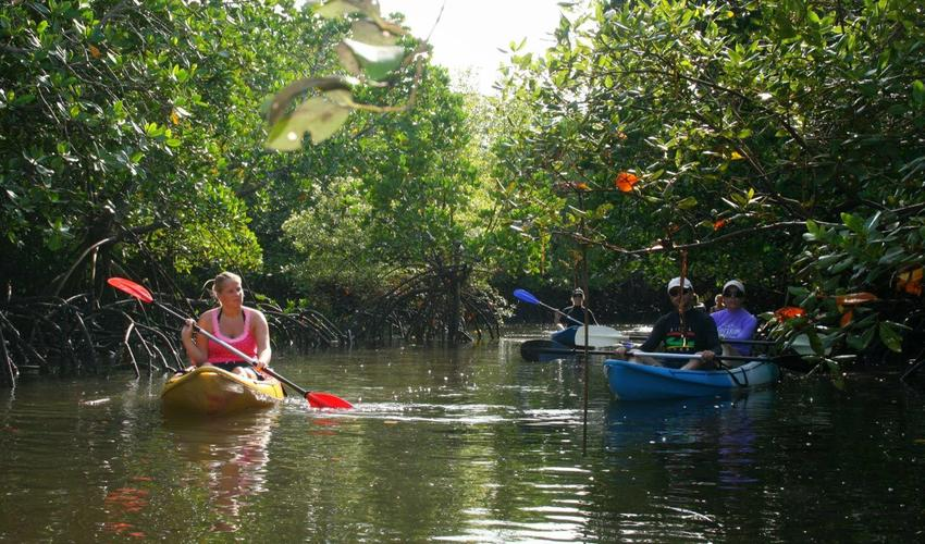 Kayaking in the mangroves at Nuarro Lodge