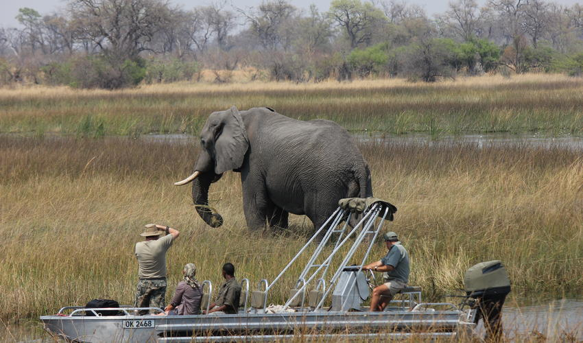 Boating safari with elephants in Selinda