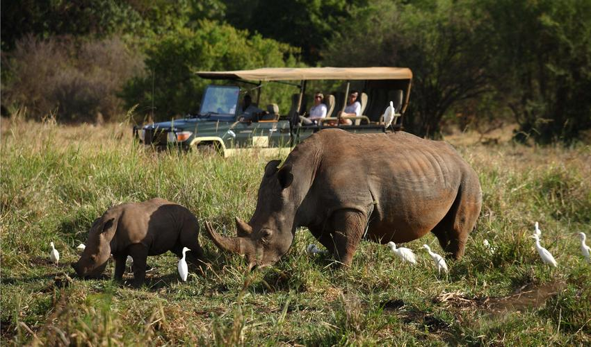 Wonderful game viewing opportunities of white and black rhino