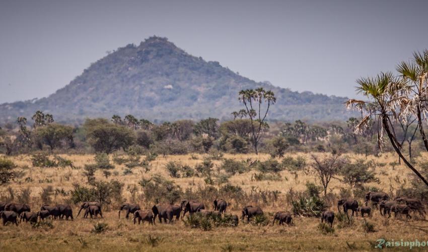 Mughwongho Hill in Meru National Park