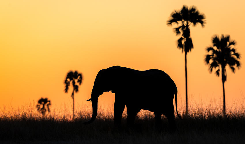 A lone elephant at sunset in Hwange National Park