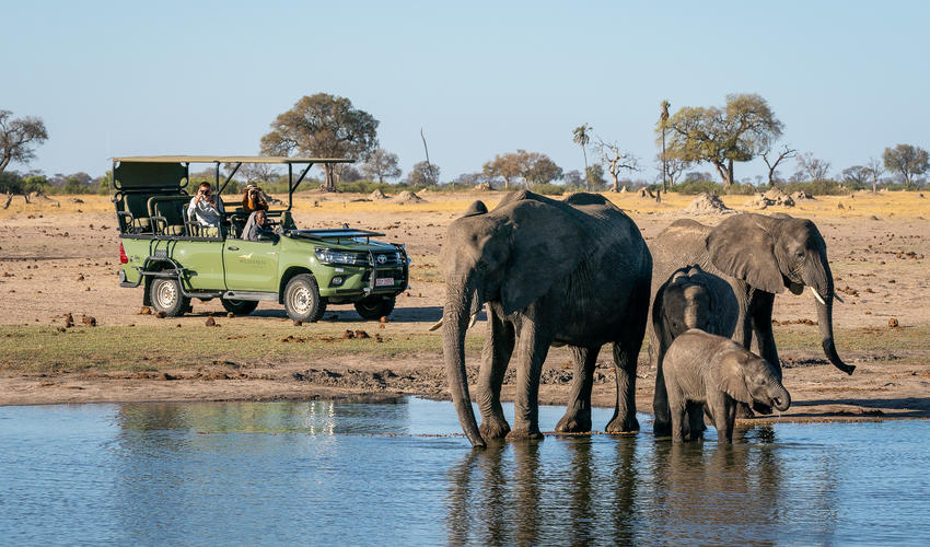 Game drive with elephants close to Linkwasha
