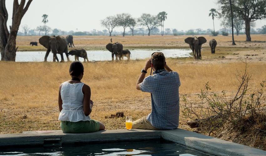 Elephants around Linkwasha