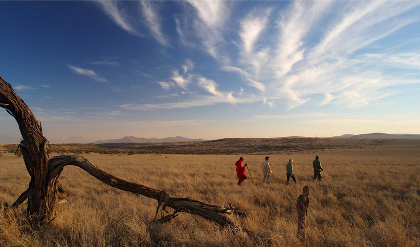 Bush walks across the plains of Lewa