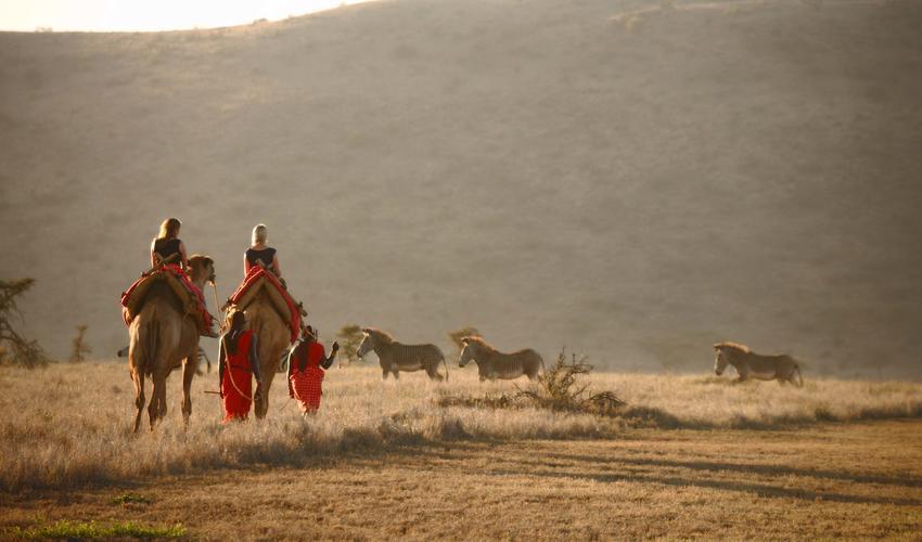 Camel-trekking across Lewa