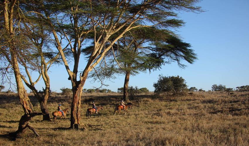 Horse riding amongst the game of Lewa
