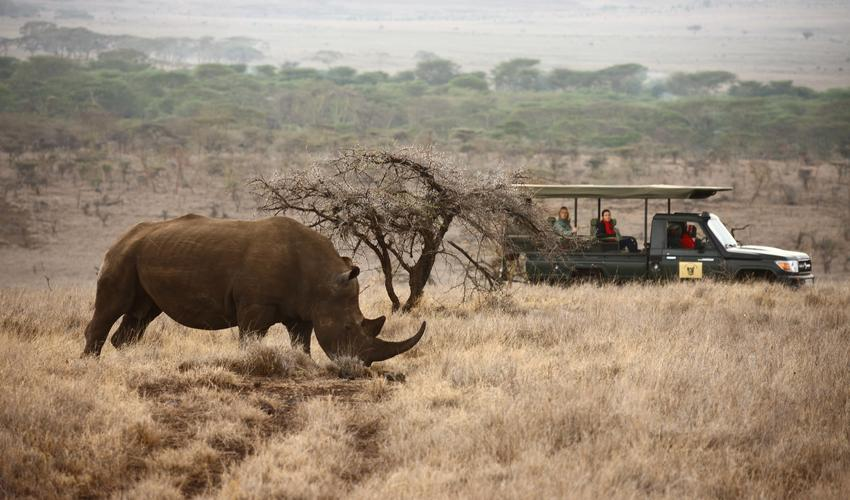 Game drives and game viewing of Lewa's rhinos