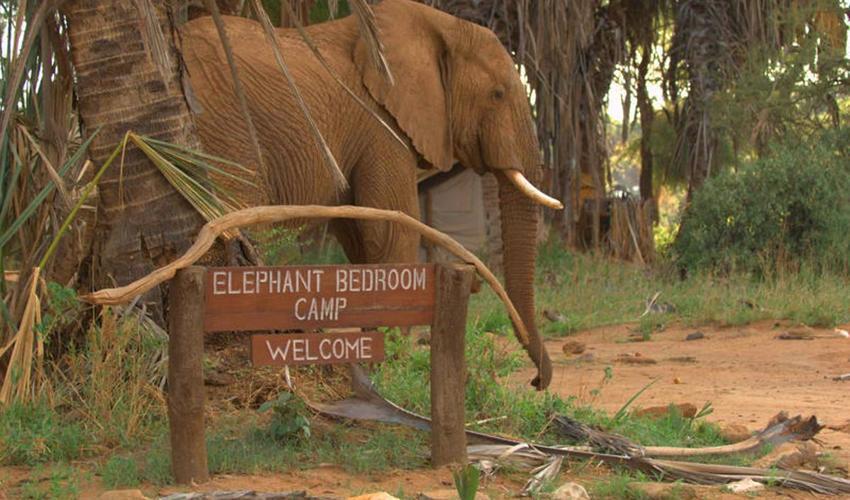 Luxury Safari Camps & Lodges