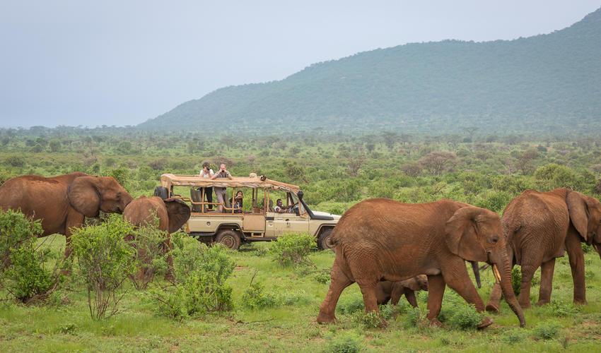 elephant bedroom camp luxury safari camps lodges