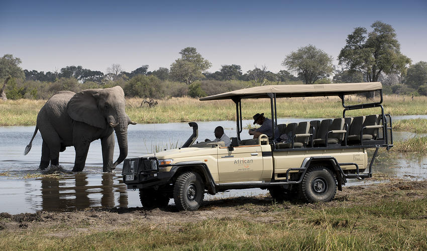 Game Drive with Elephant